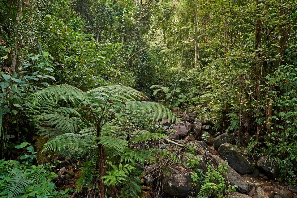 Sinharaja Sri Lanka  City pictures : Hier im Sinharaja Forest Reserve sind Sri Lankas letzte Reste von ...
